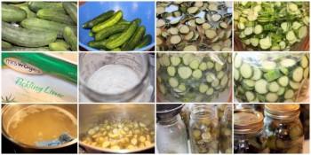 Cucumber Crisp Sweet Pickles Recipe