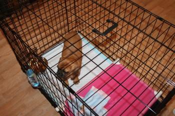Poo Palace Puppy Training Kit
