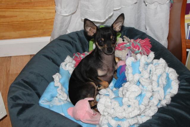 Luca for Dogs, Cuddler Dog Beds #pets #holidaygiftguide2015