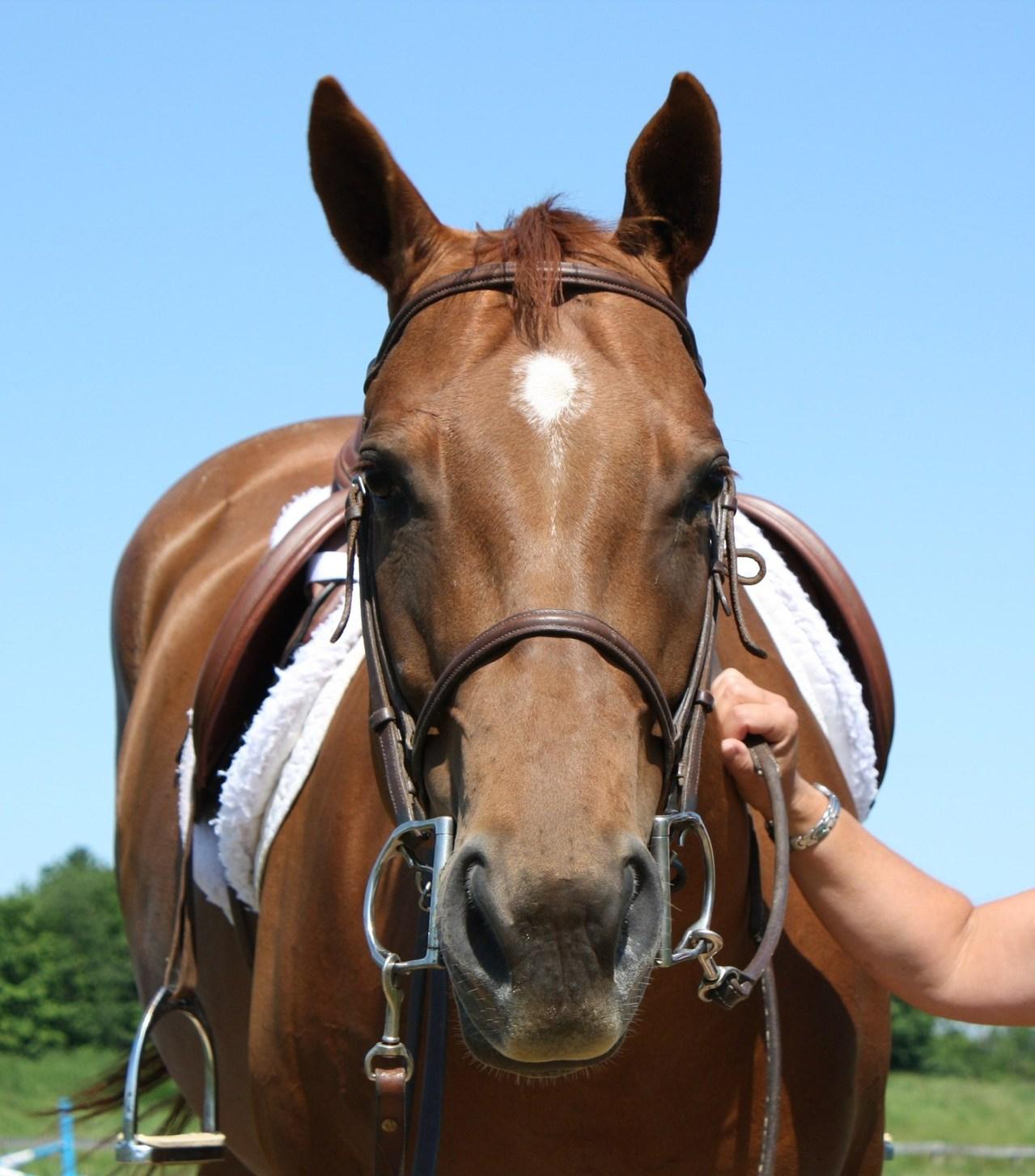 Advantages Of Horseback Riding