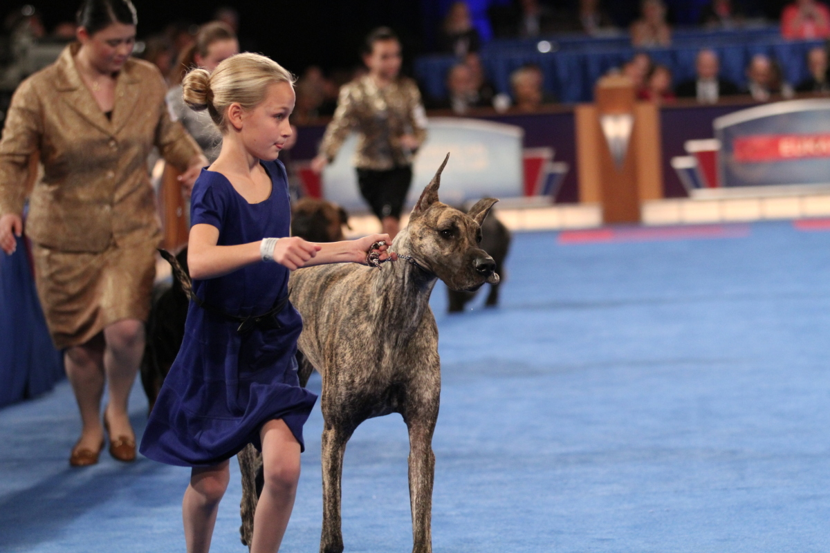 EUKANUBA™ National Championships in Orlando Florida  12/12 & 12/13 #EukanubaChamps