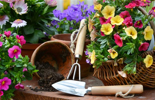 Tips and trick for successful fall garden prep
