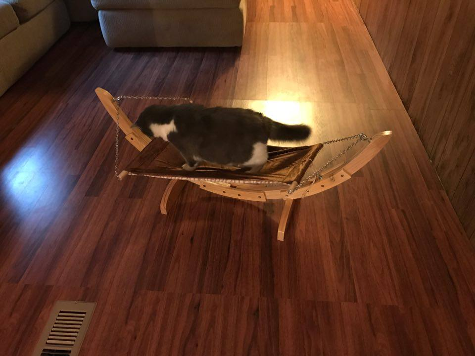 Chelseas New Cat Hammock #PetMagasinCats #cats  #kittens