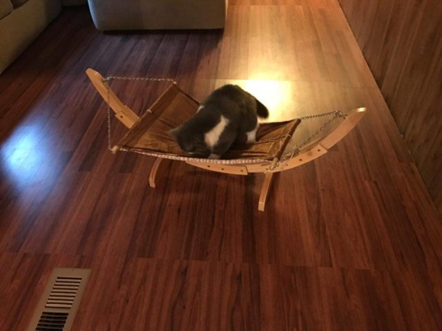 Chelseas New Cat Hammock #PetMagasinCats