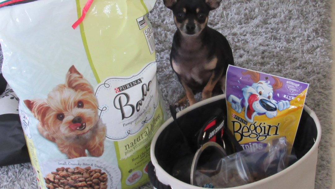How To Pack For A Day Of Hiking With Your Pet #ad #PurinaMysteries #CollectiveBias