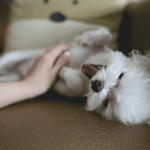 How to stop your dog from barking?