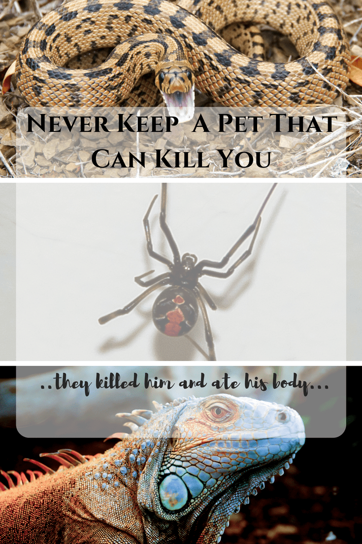 Never Keep a Pet That Can Kill You