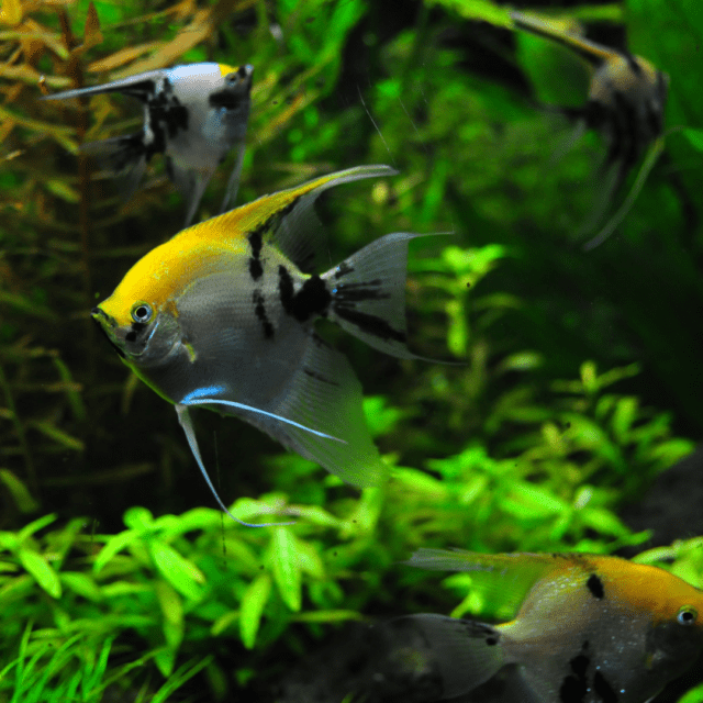 How many fish is too many in an aquarium?