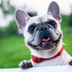 9 Easy Ways To Make Your Dog Feel Special