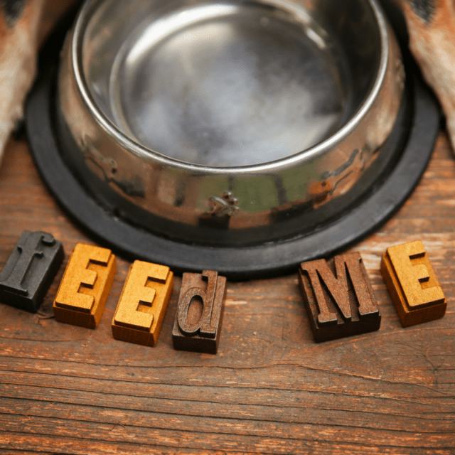 Foods That You Should Avoid Giving to Your Dog