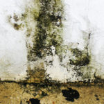 Cope Don't Cover: The Real Risks Of Ignoring Damp In The Home