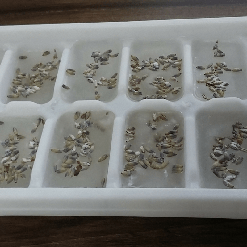 Step By Step D.I.Y. Lavender Ice Cubes Tutorial