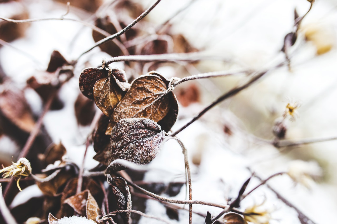How To Help Your Backyard Survive The Winter