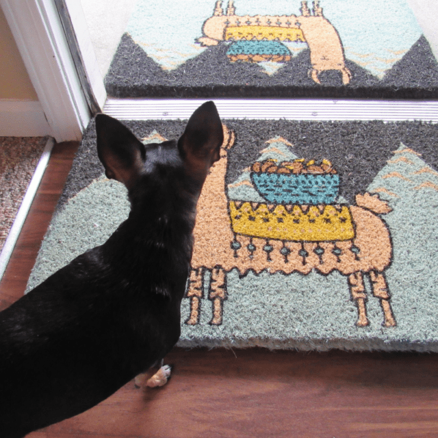 Larry the Llama Doormat from Uncommon Goods #gifts #holidayshoppersgiftidea