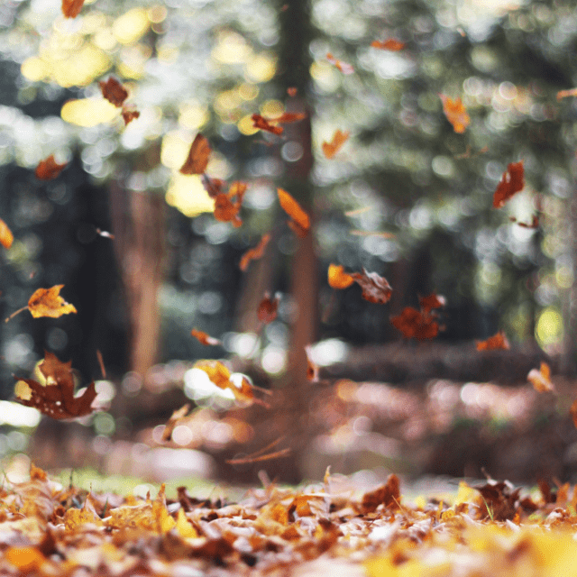 Summer vs. Fall Ways to Have Fall Fun in the Cooler Months