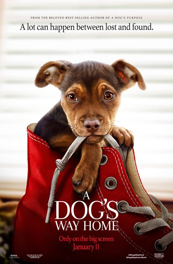 A Dog's Way Home Movie January 11, 2019 #Ad #Giveaway #ADogsWayHome #rwm