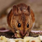 How To Protect Your Store From Rodents This Spring