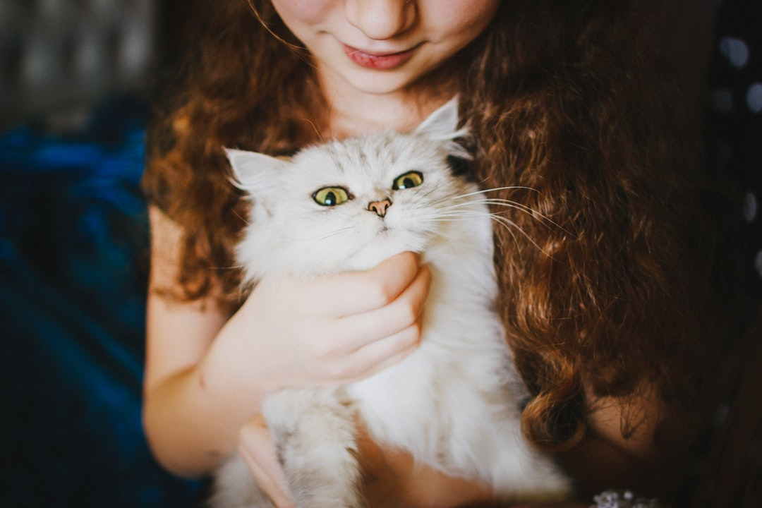 CBD for Your C-A-T: How Your Feline Friend Can Benefit From CBD Cat Treats