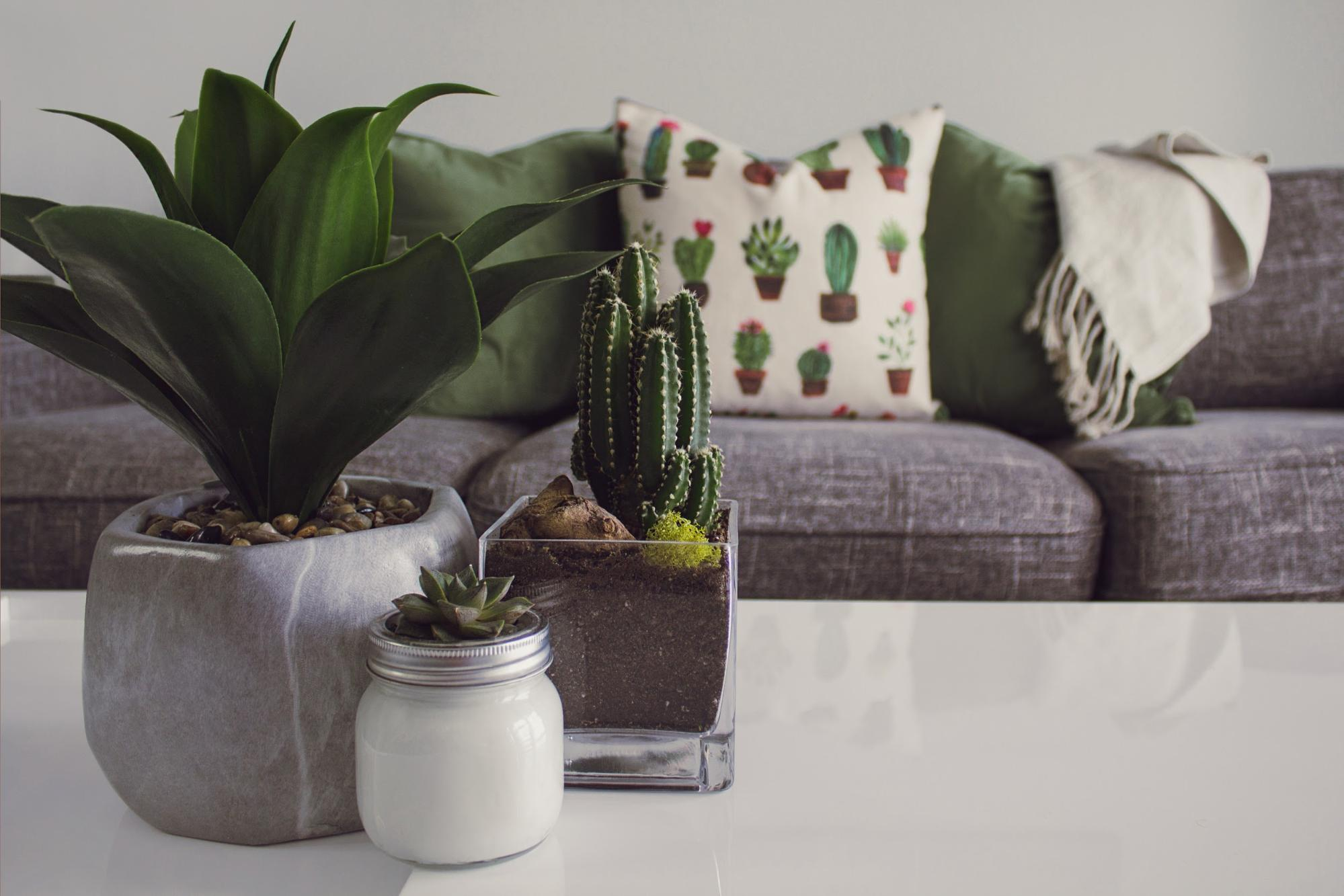Going Green: A Definitive Guide To Indoor Plants