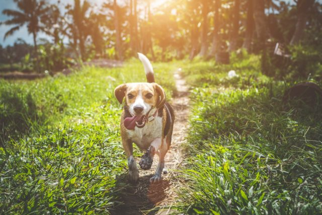 10 Common Dog Owner Issues and Solutions
