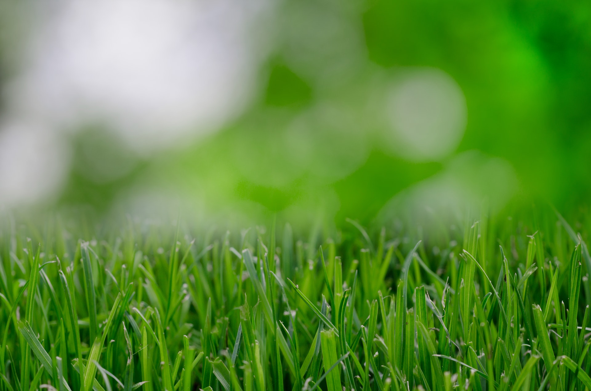 6 Tips To Get Your Lawn Winter-Ready