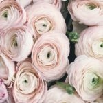 Your Perfect Guide To Choosing Summer Wedding Flowers