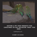 Gifting A Pet Bird Parakeet For Christmas Or Any Occasion. What You Need.