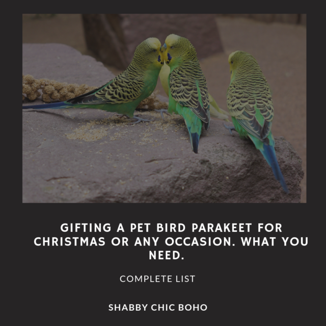 Gifting A Pet Bird Parakeet For Christmas Or Any Occasion. What You Need. #birds #pets #parakeets #birdcage #birdaccessories #animals #birding #naturelovers #birdlovers