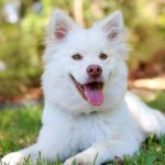 Things To Consider When You Have A New Dog