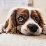8 Things To Buy For Dog Lovers