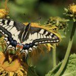 3 Ways To Make Friends Through Gardening