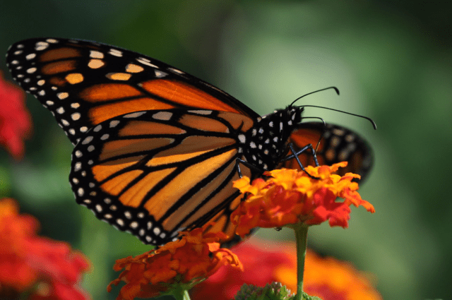 How To Turn Your Garden Into A Haven For Wildlife