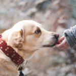 4 Important Things to Consider Before Getting a Dog for a Pet