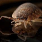 5 Reasons To Hire Professionals For Eliminating Bed Bugs