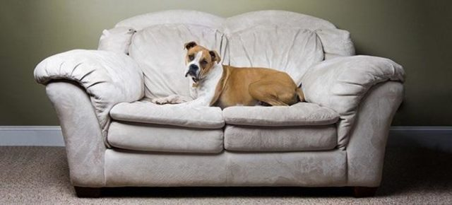 Don't Let Your Home Smell Like a Kennel