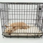 How to Crate Train an Adult Dog: 9 Tips from the Pros in 2020
