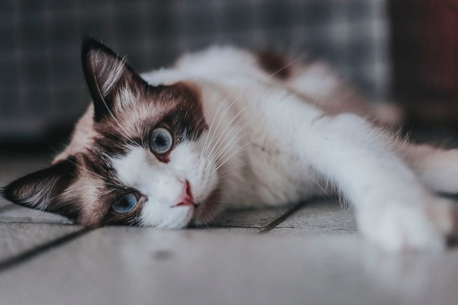 Is It Time for a Cat Check Up? How Often to Schedule a Vet Visit