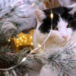Christmas Gift Guide 2019 Pets Shabby Chic Boho