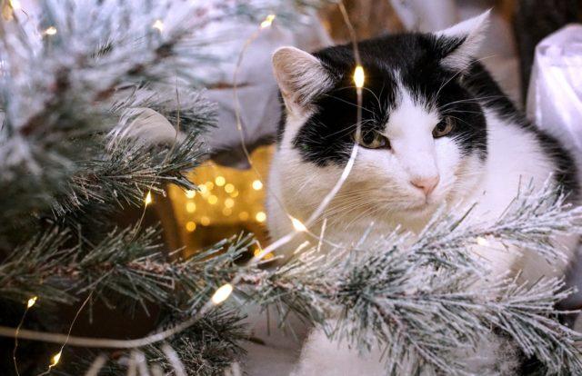Christmas Gift Guide 2019 Pets