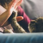 Perfect Gifts For Pet Lovers