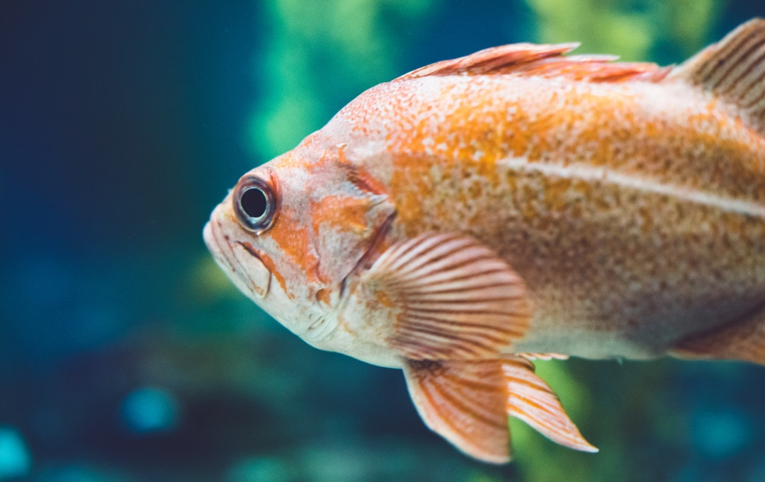 Underwater Treasures: How to Build Your Own Aquarium