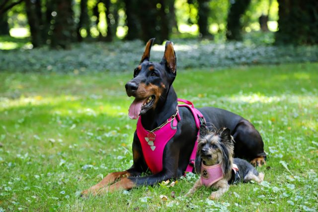 5 Types Of Dog Harnesses Owners Are Loving