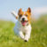 Should I Get a Dog? 5 Ways to Know You're Ready for a Pet
