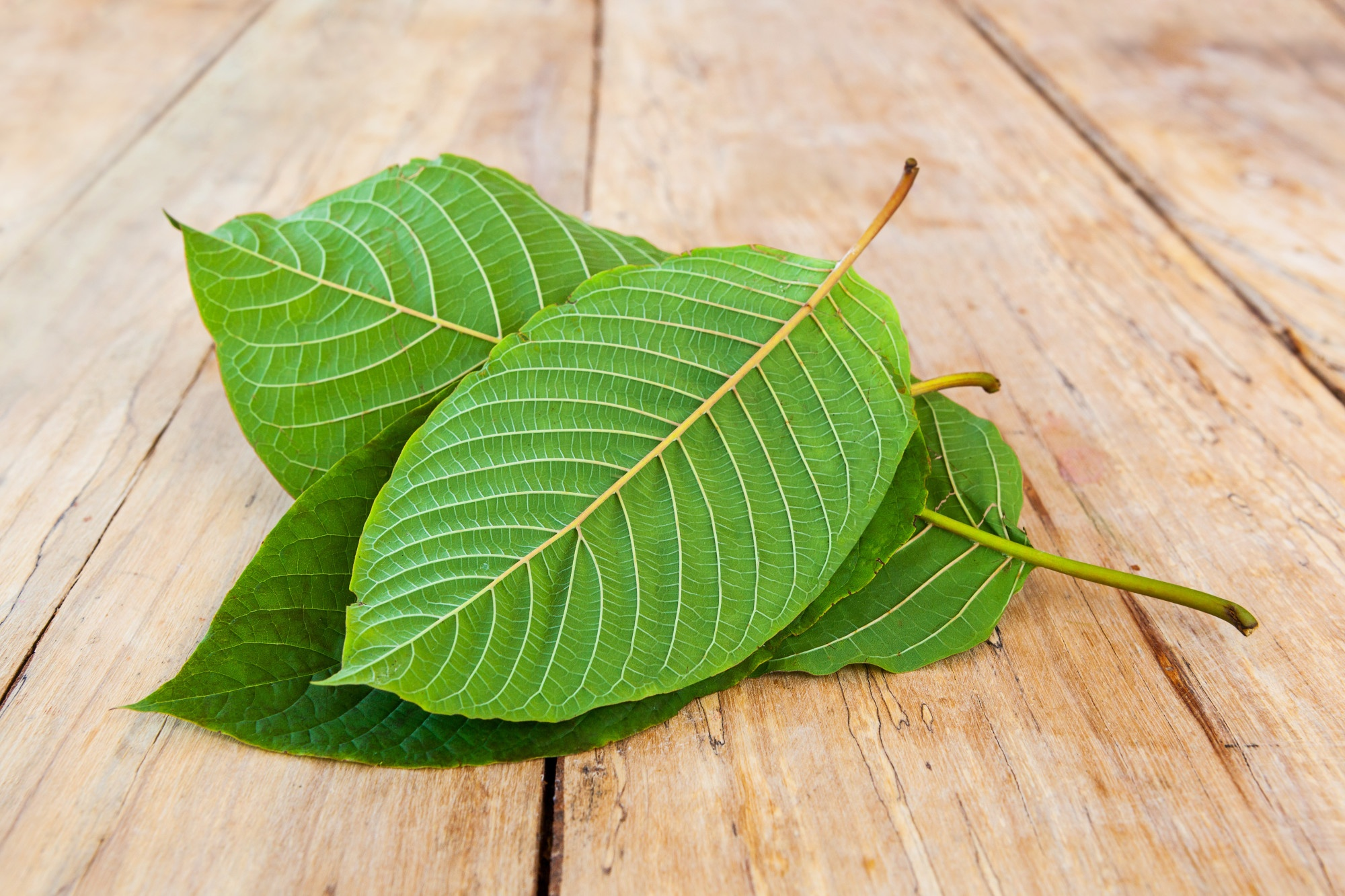 The Top 4 Astounding Health Benefits of Kratom Leaves
