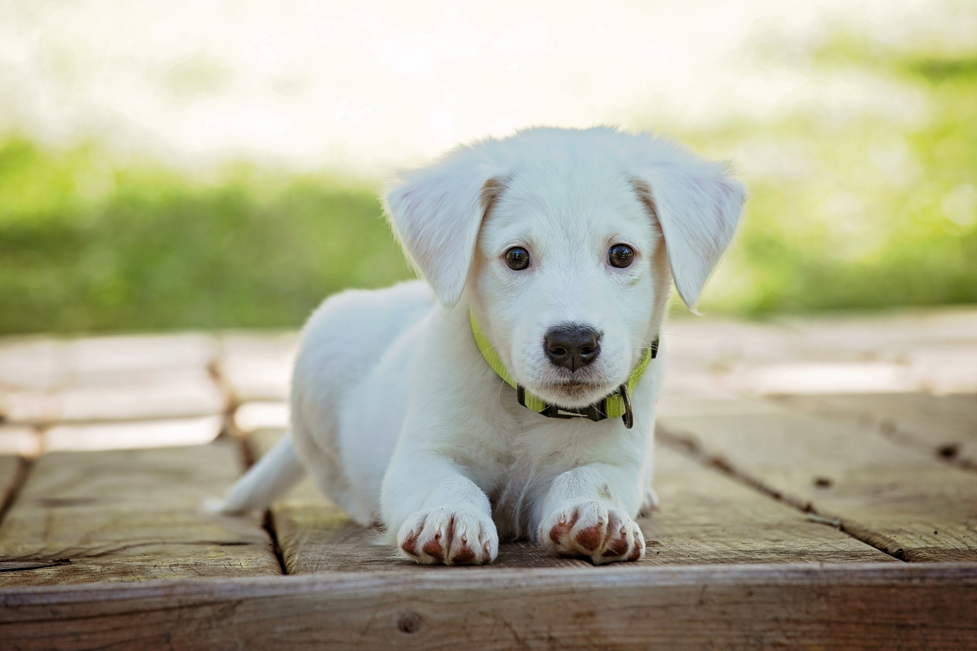 8 Tips Every First-Time Puppy Owner Needs to Follow