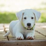 Puppy Basics: 4 Important Things to Teach Your Puppy