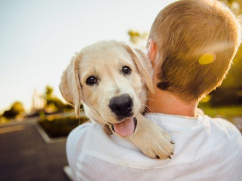 Don't Lose Heart - 3 Reasons Why Your New Dog is Worth It
