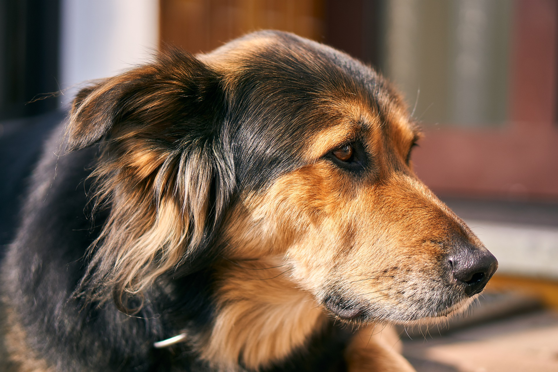 Ways to Help Your Overweight Dog Get in Shape