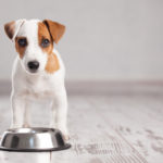 Homemade Diet for Dogs: 7 Key Benefits of Homemade Dog Food