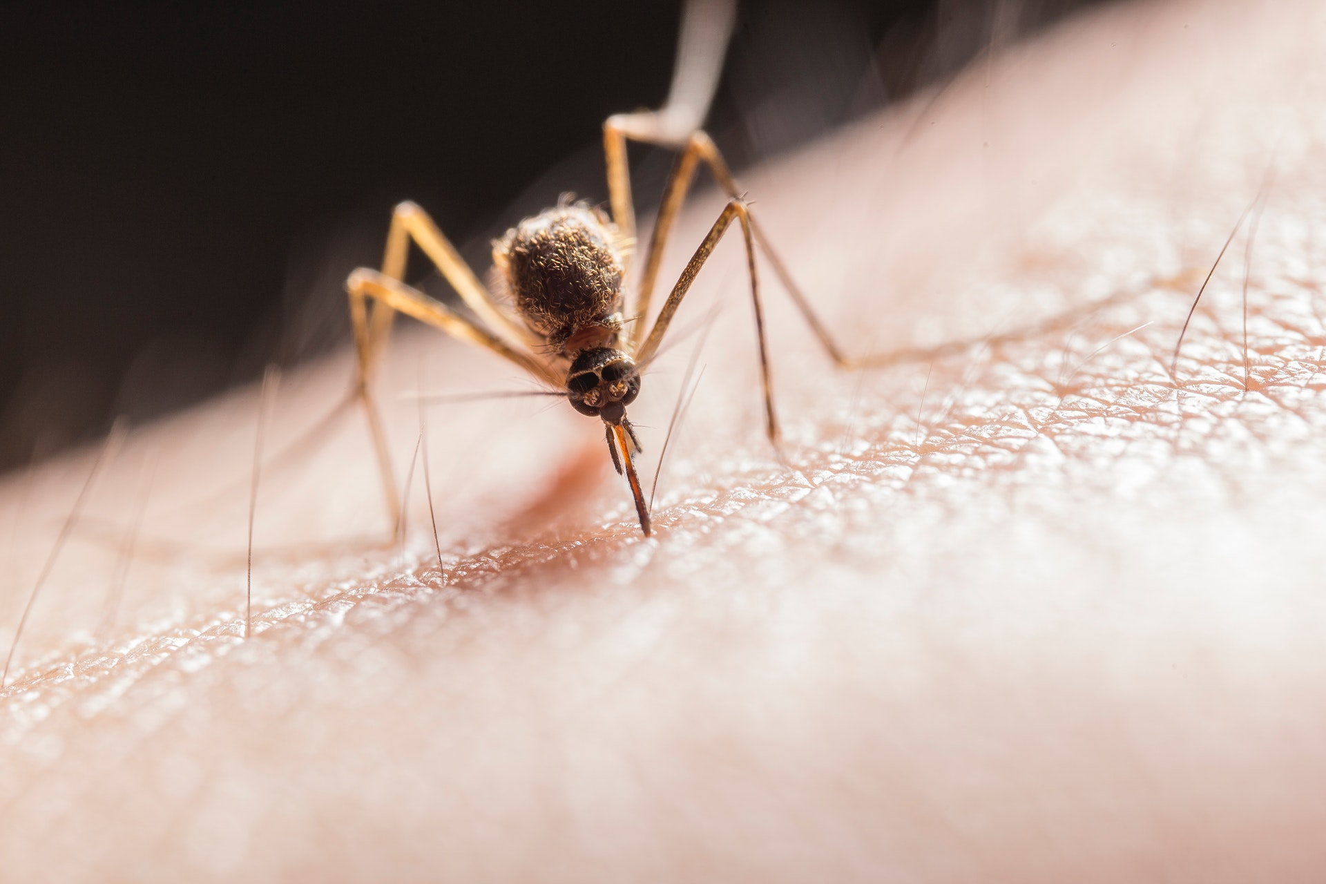 Top Tips For Managing Mosquitoes in Your Garden